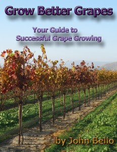 Grapes eBook cover 231x300